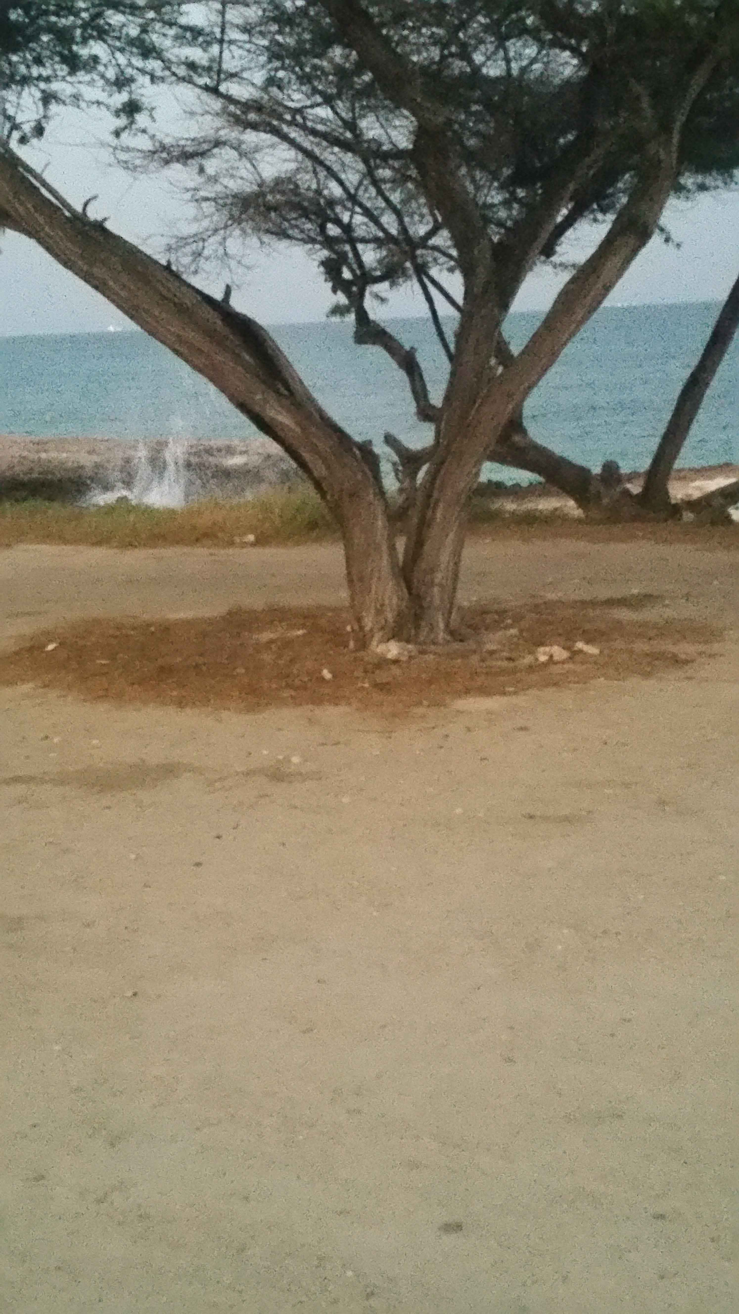 Vakantiewoning Aruba Malmok Beach2 - OMGEVING