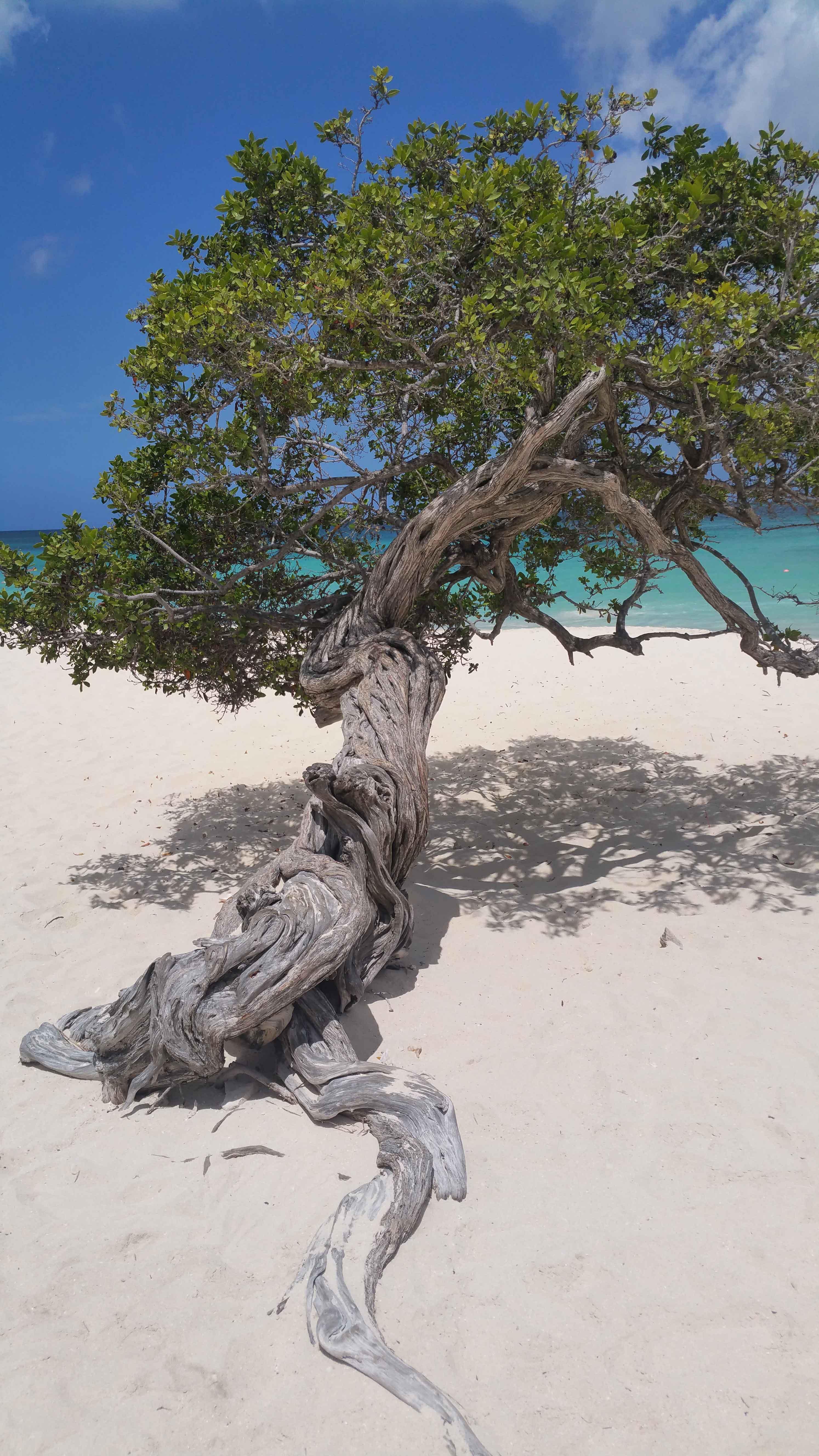 Vakantiewoning Eagle beach st - OMGEVING