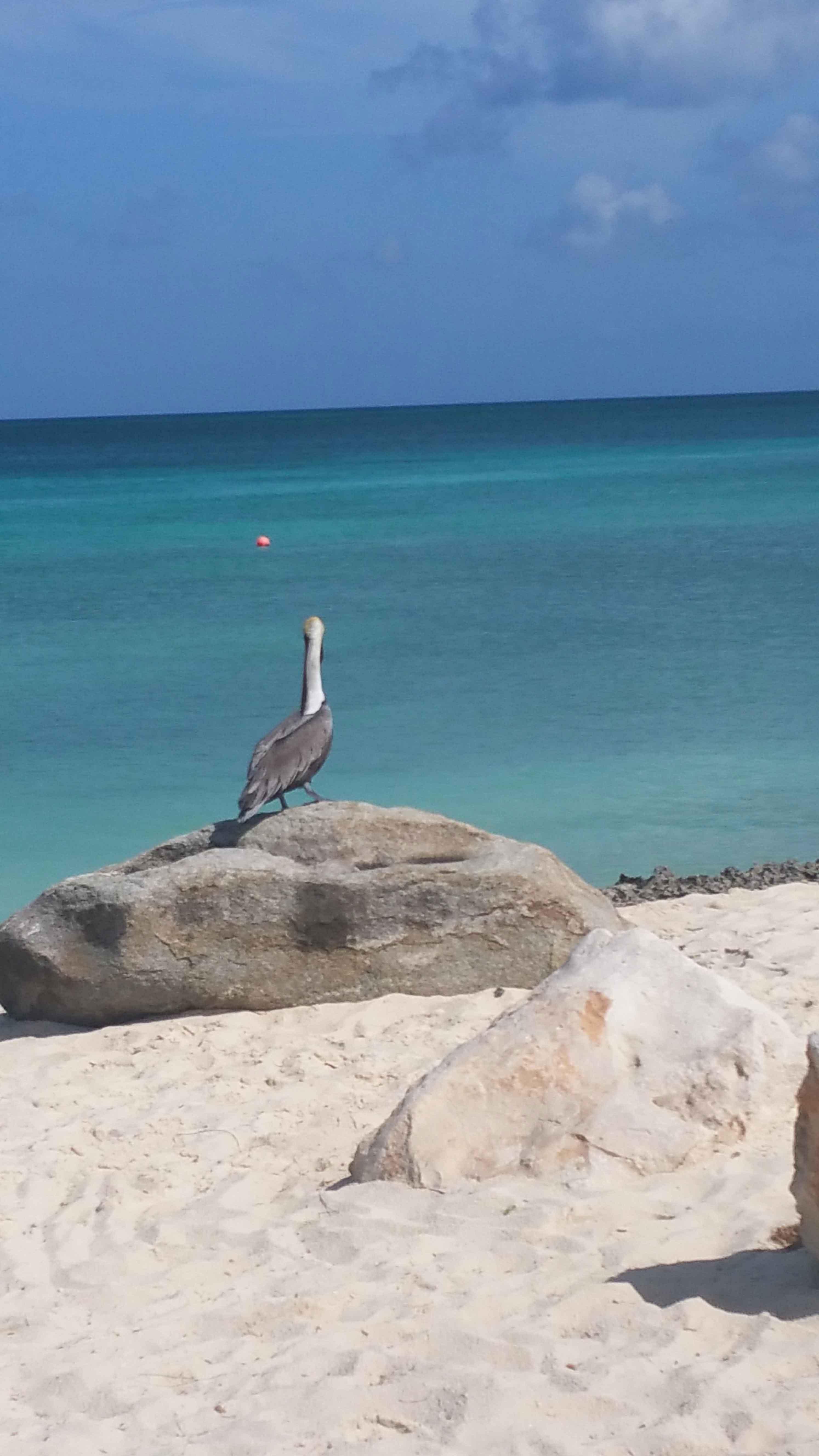 Vakantiewoning Eagle beach st 3 - OMGEVING